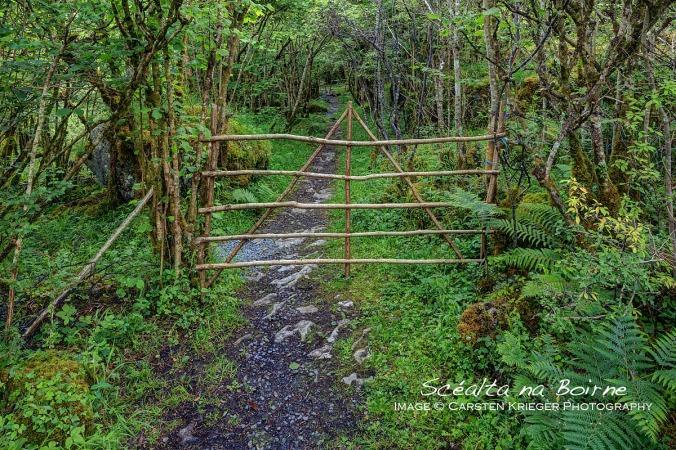 Poulnalour Forest Path