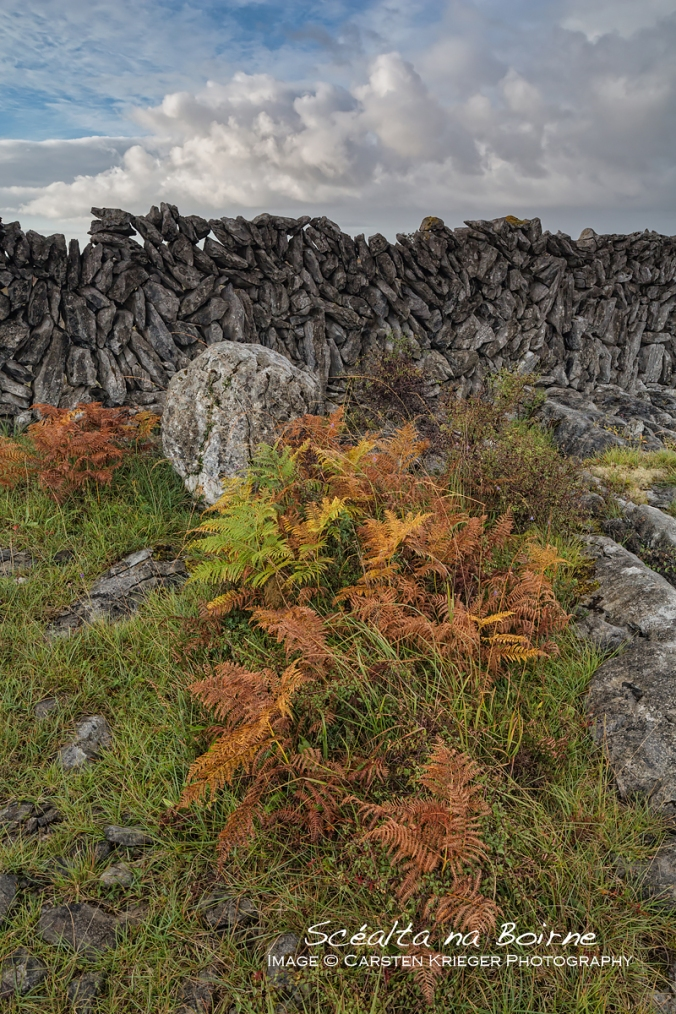 Burren Wall, Autumn Colours