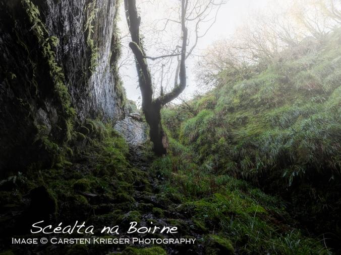 Burren_Landscape_33